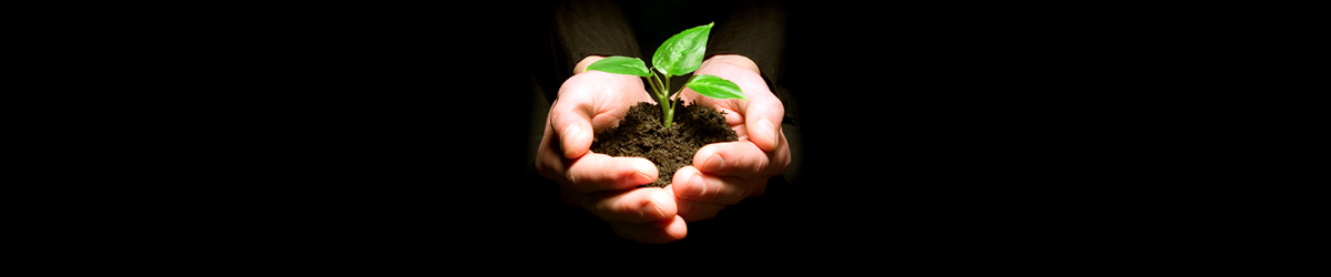 Human hands holding a young green plant